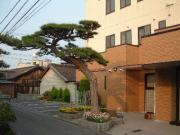松の木が当院のシンボルです